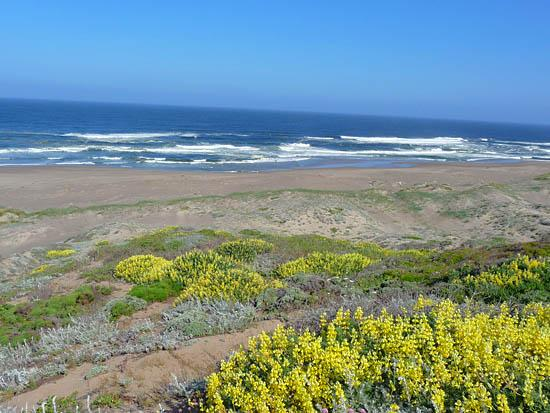 Abbotts Lagoon is framed by vegetated sand dunes home to the snowy plover